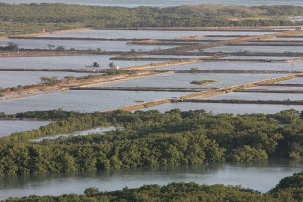 Área de criação de camarão: De acordo com Associação do setor, 35% dos criadores possuem licenças ambientais. O índice para os microempreendedores cai para 7%. (Foto: Aldair Dantas)