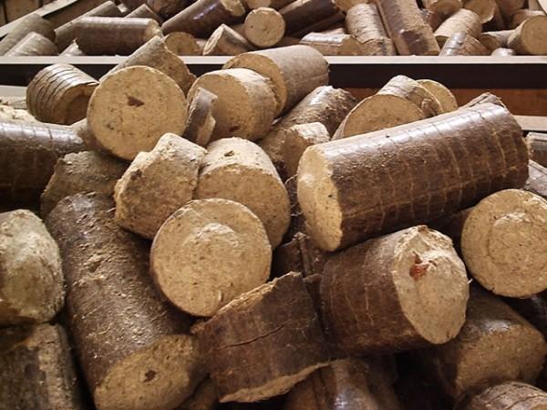 Foto: www.ciflorestas.com.br