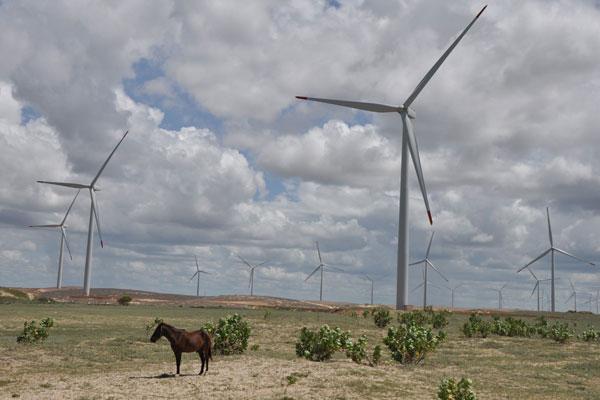 Parque eólico no RN: 15 usinas entraram em operação no Estado. (Foto: Bruno Abreu)