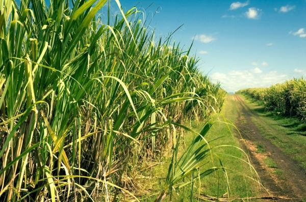 Entrada da safra da cana-de-açúcar gera pico de empregos no período. (Foto: www.producaodebiodiesel.com.br)
