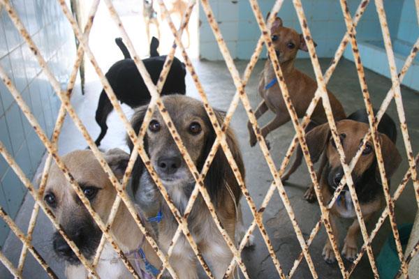 Sesap espera vacinar mais de 500 mil cães em todo o Rio Grande do Norte. (Foto: Emanuel Amaral)