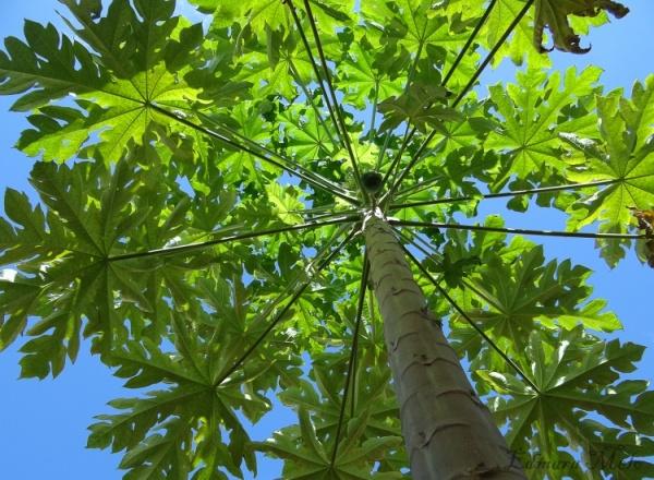 Foto: flores.culturamix.com