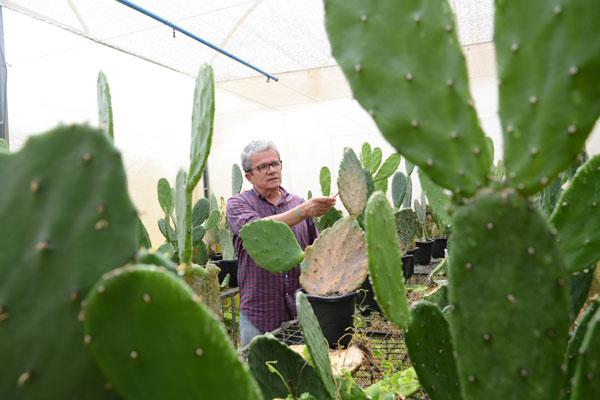 Marcone César, da Emparn, explica estudo sobre a plantação de palma irrigada que vem sendo desenvolvido no Seridó e Oeste. (Foto: Alex Régis)