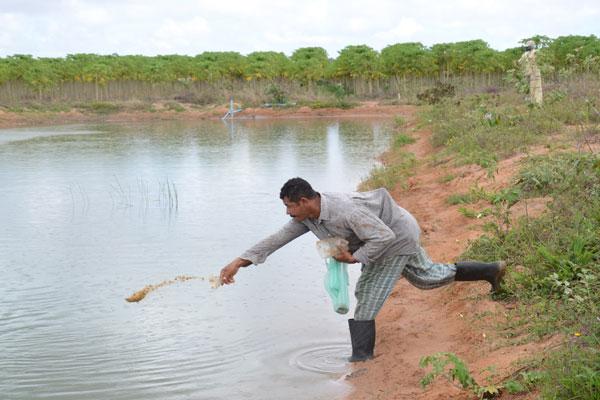 Trabalhador assentado alimenta tilápias no RN: Atividade gera água para irrigação e tem planos de alcançar novos mercados. (Foto: Junior Santos)