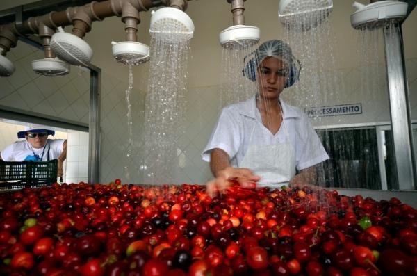 arta Jussara de Araújo ajuda a família trabalhando no beneficiamento das frutas; por hora de trabalho, recebe R$ 3 reais. (Foto: Ney Douglas)