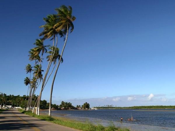 Coqueirais na praia de Barra de Cunhaú, no litoral Sul potiguar (Foto: Canindé Soares)