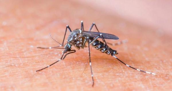 Assim como chikungunya e dengue, o tratamento da zika é sintomática e feito com paracetamol, desde recomendado por um médico.  (Foto: noticias.band.uol.com.br)