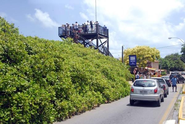 Em um mirante, turistas apreciam  vista da árvore. (Foto: Ney Douglas)