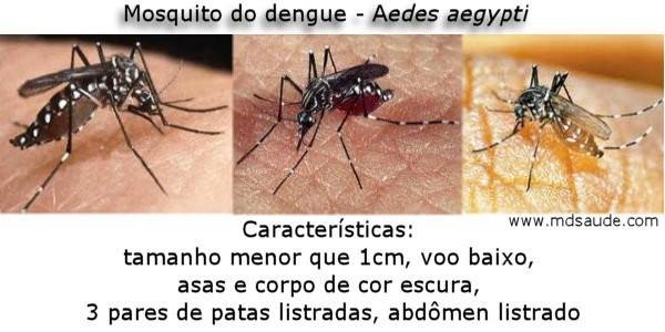 Mosquito-aedes-aegypti